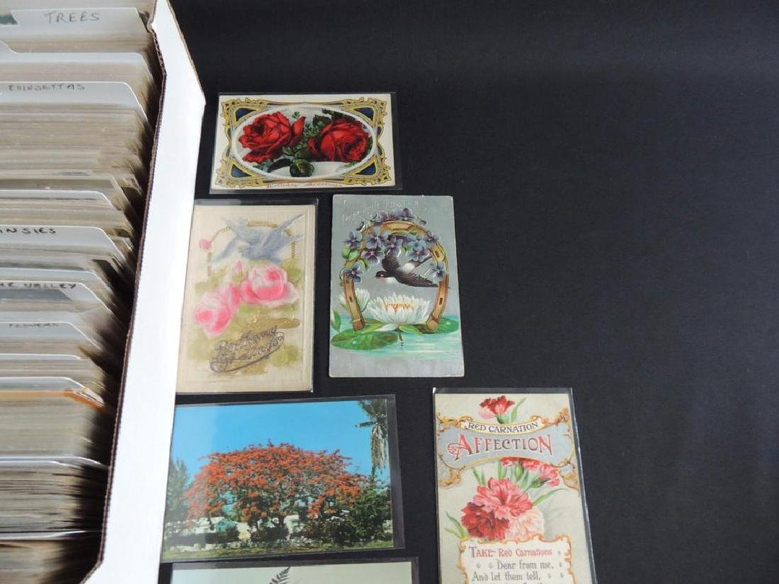 Approximately 700 Plus Flower Postcards - 5