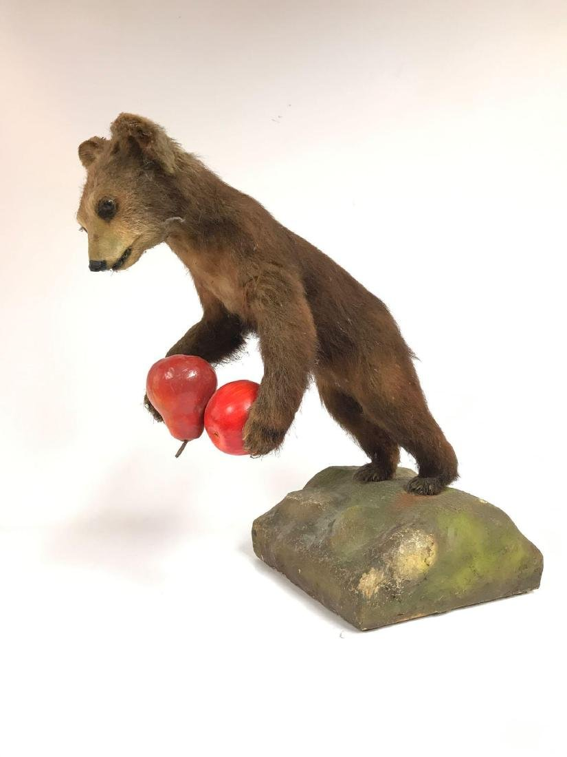 Antique Bear Cub Taxadermy - 2