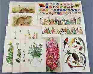 Group of antique lithographs, animals, flowers, plants