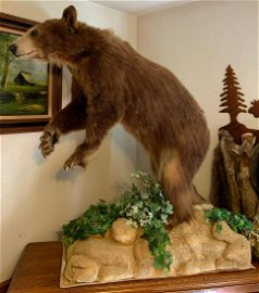 Large Brown bear mount with faux rock base