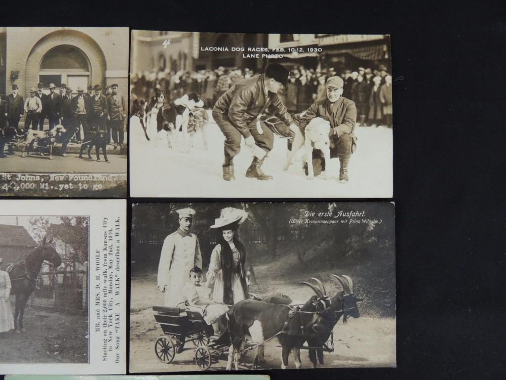 Group of 5 Postcards of Horse Drawn Carriages, Dog - 2