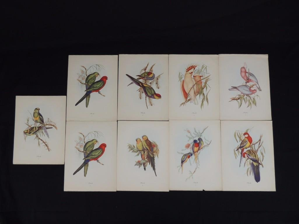 Group of 9 J. Gould Prints Featuring Tropical Birds