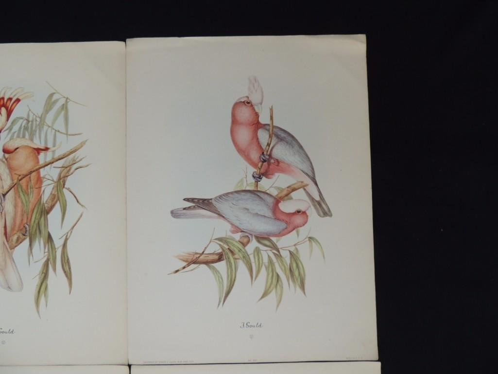 Group of 9 J. Gould Prints Featuring Tropical Birds - 2