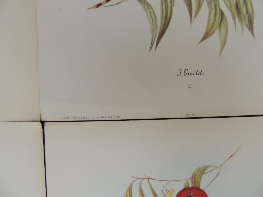Group of 9 J. Gould Prints Featuring Tropical Birds - 3