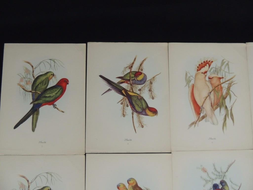 Group of 9 J. Gould Prints Featuring Tropical Birds - 4