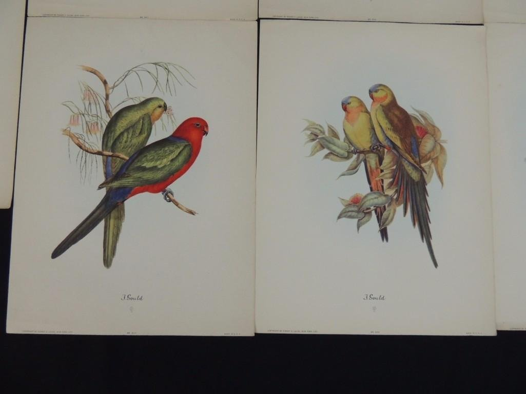Group of 9 J. Gould Prints Featuring Tropical Birds - 6