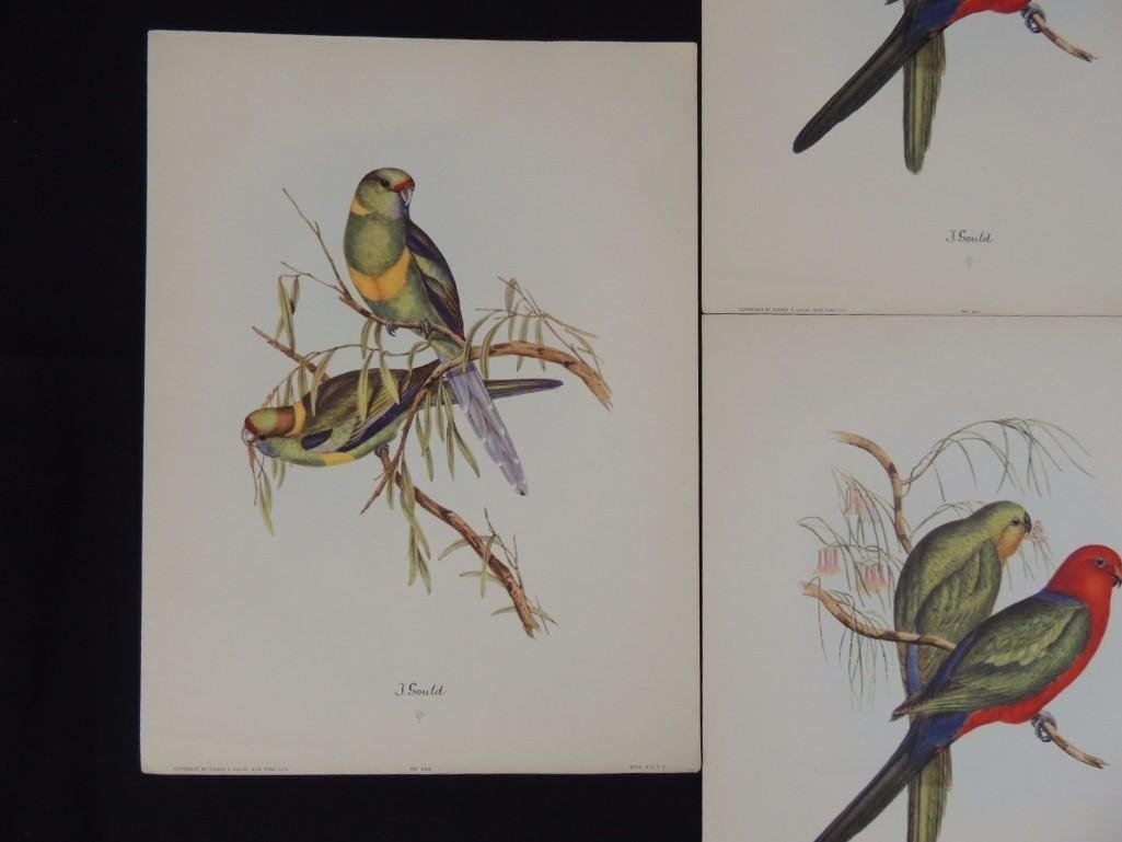 Group of 9 J. Gould Prints Featuring Tropical Birds - 7