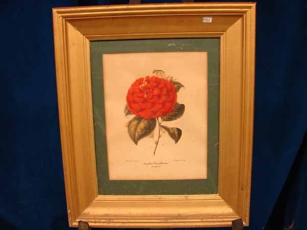 20: Color Print of Red Flower (P 534
