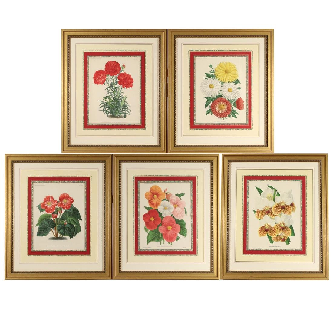 (5pc) FINELY FRAMED BOTANICAL PRINTS