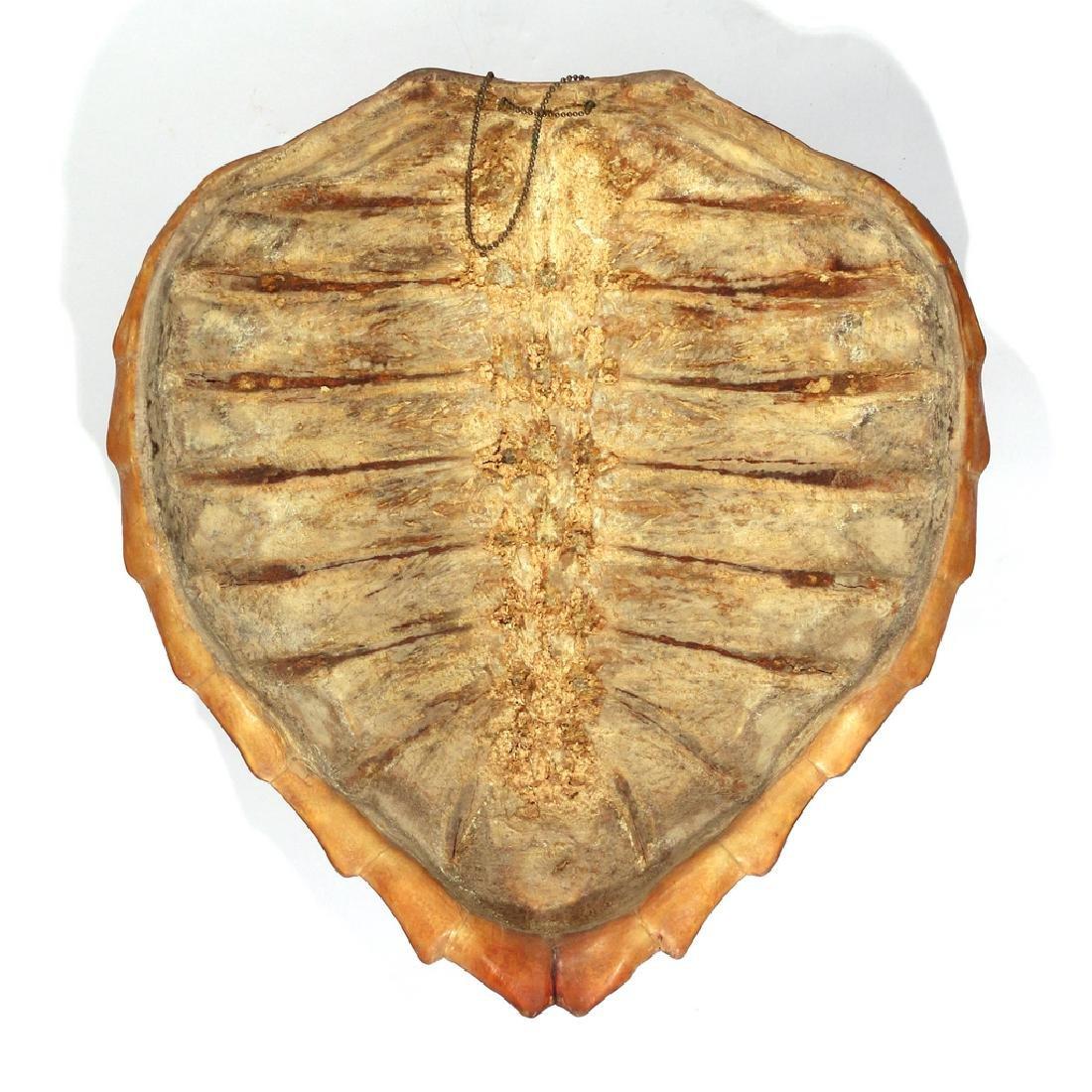 LARGE ANTIQUE TORTOISE SHELL - 3