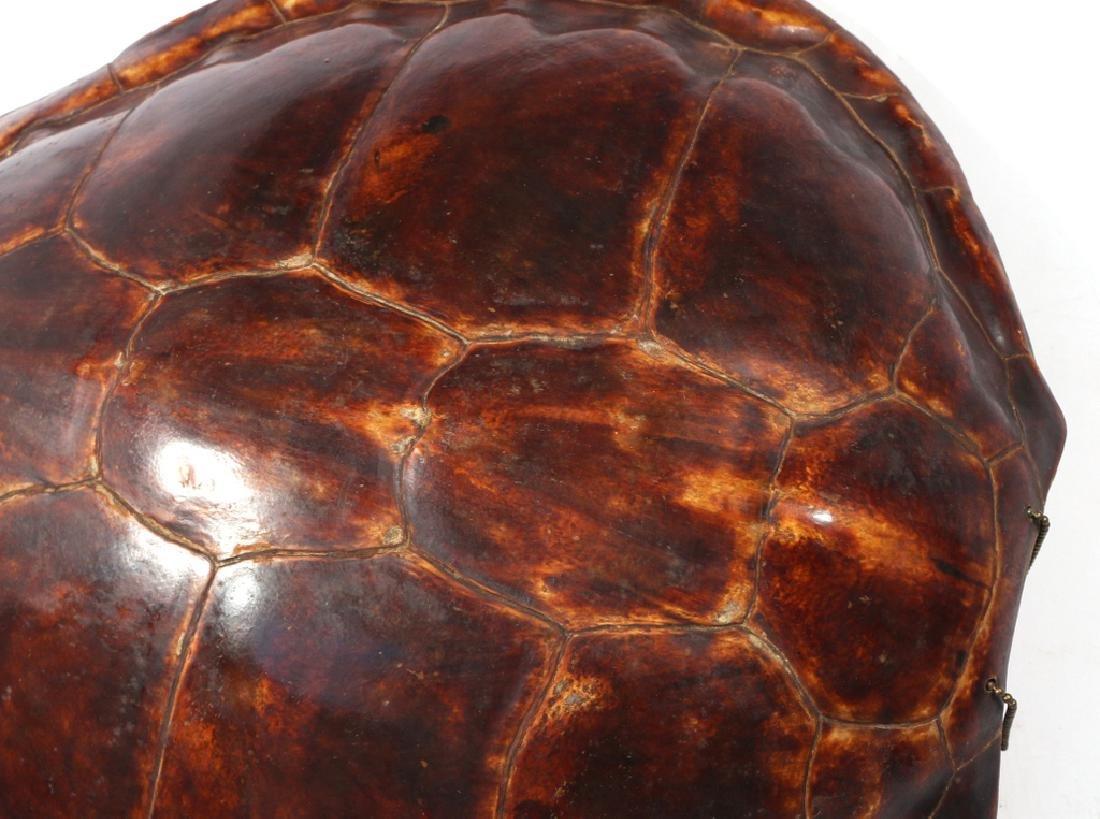 LARGE ANTIQUE TORTOISE SHELL - 5