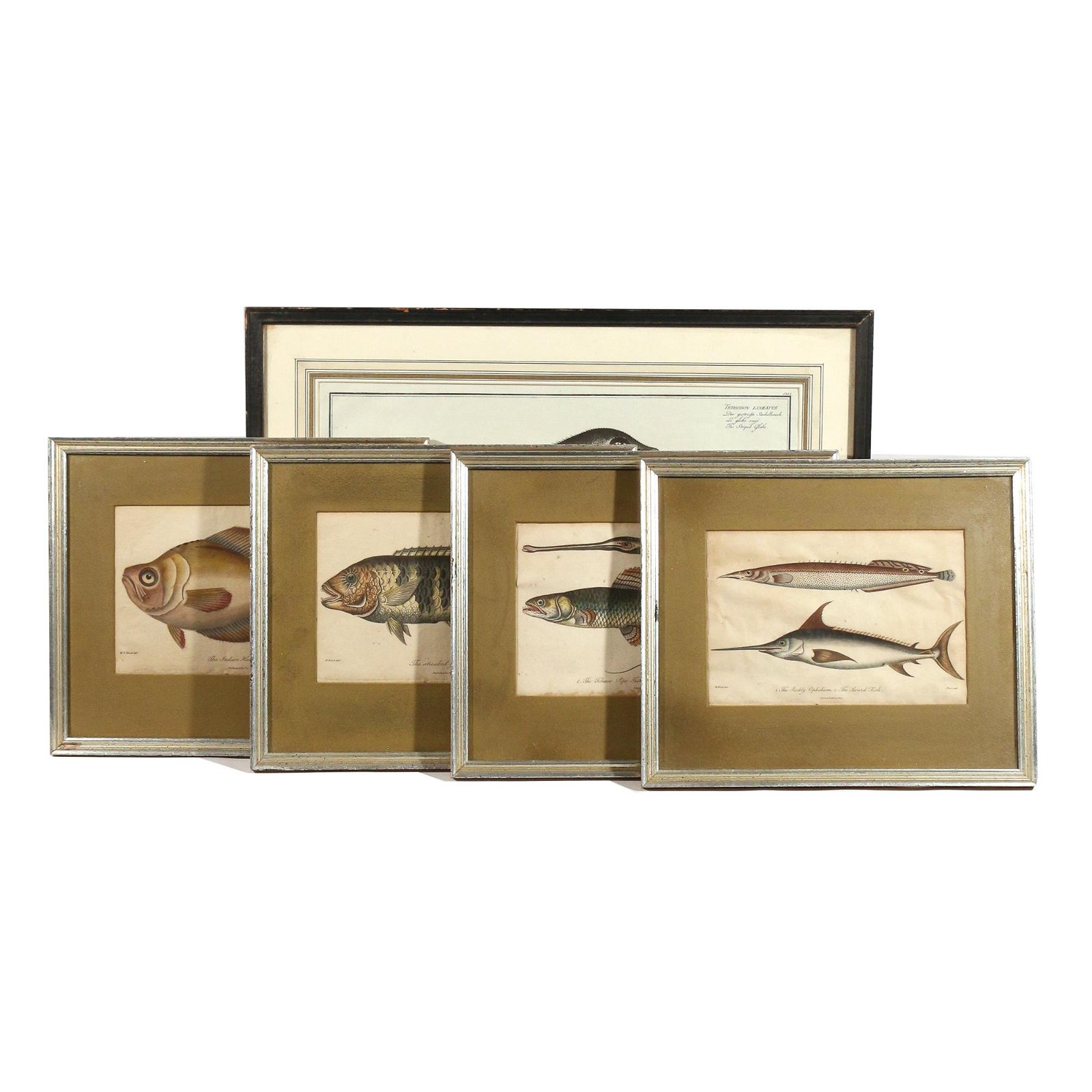 (5pc) COLOR FISH ENGRAVINGS, INCL. MARCUS BLOCH