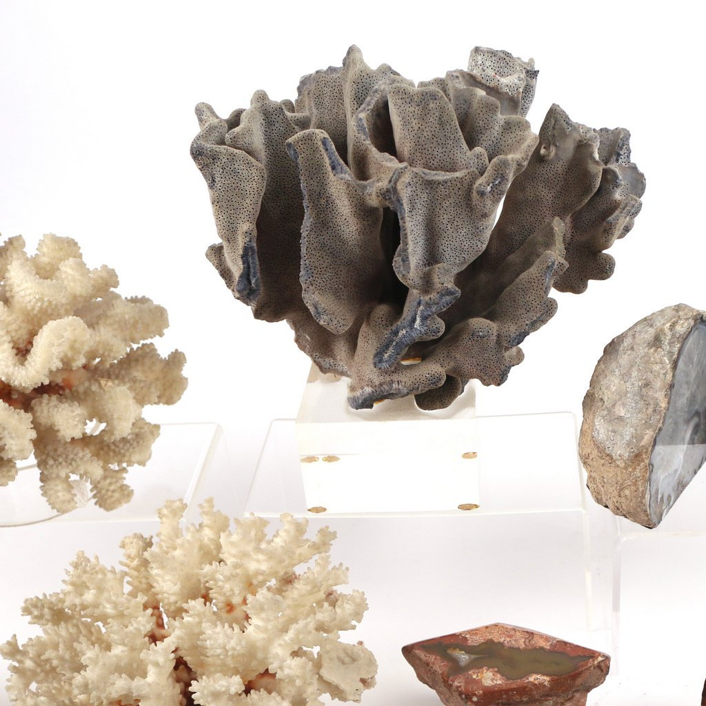 (10pc) GEODES AND CORAL - 4