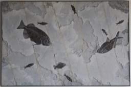 PALATIAL GREEN RIVER FOSSIL MURAL WALL ART