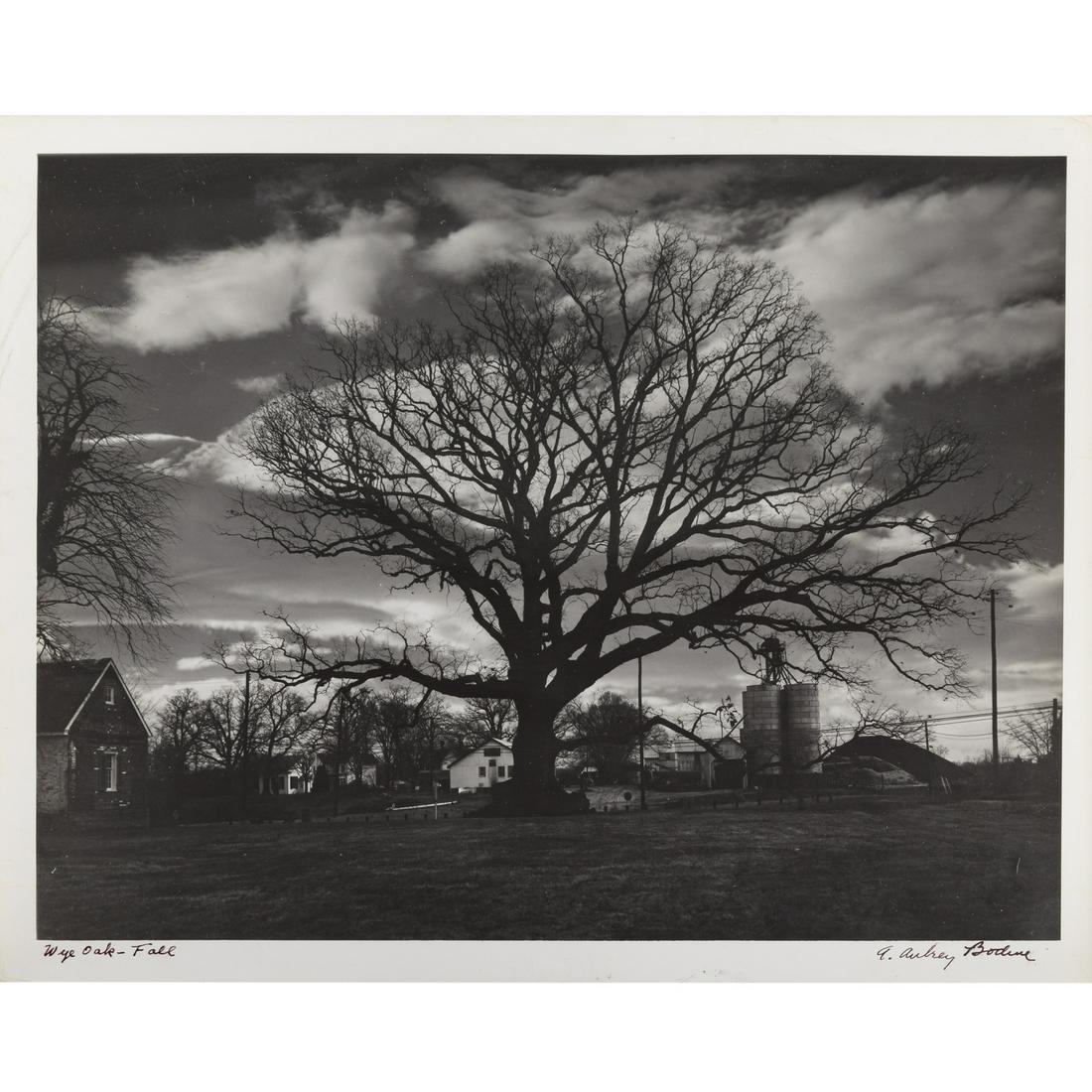 "A. Aubrey Bodine. ""Wye Oak-Fall"""