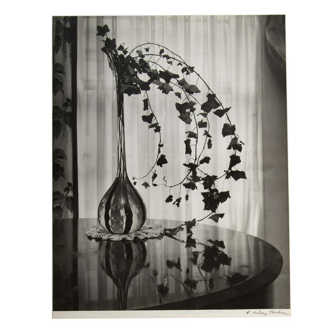 "A. Aubrey Bodine. ""Still Life and Ivy"" 1945"