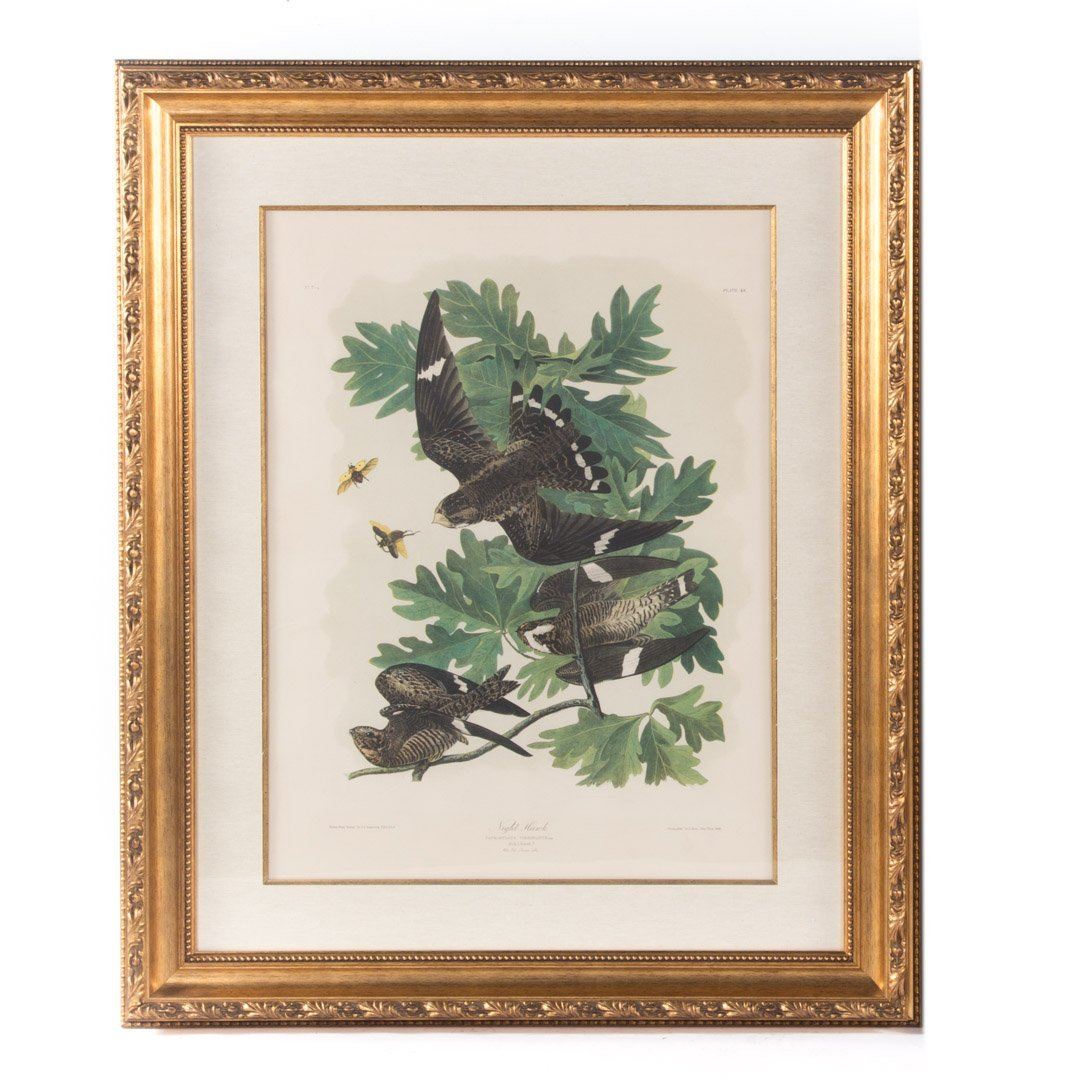 "After John J. Audubon. ""Night Hawk,"" lithograph"