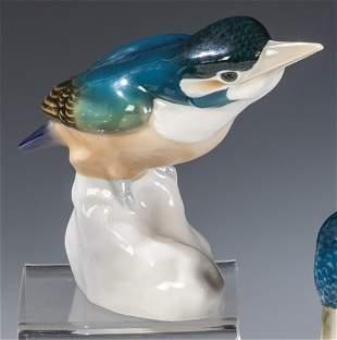 Eisvogel Kopf gestreckt