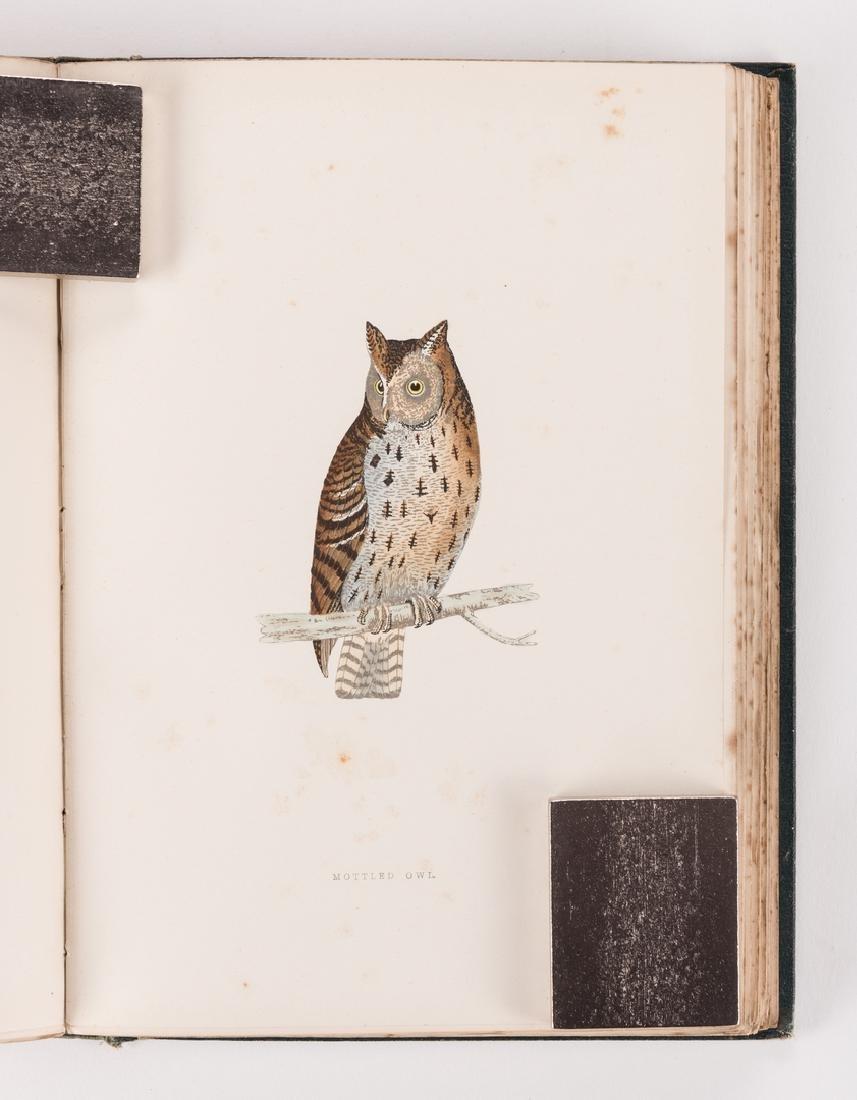 History of British Birds, F. Morris, 1891, 6 Vols. - 5