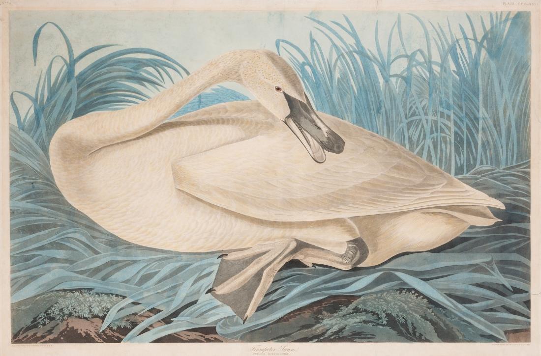 John J. Audubon Trumpeter Swan, Havell ed.