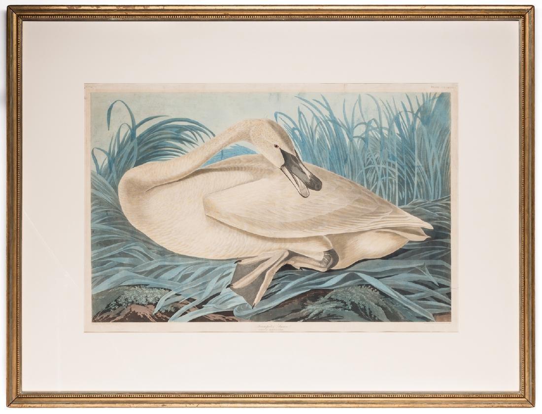 John J. Audubon Trumpeter Swan, Havell ed. - 2