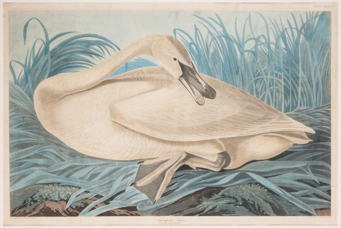 John J. Audubon Trumpeter Swan, Havell ed. - 8