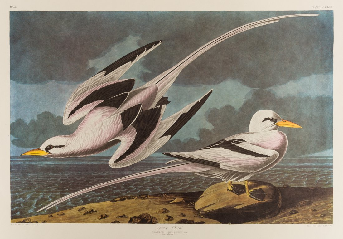 Group of 10 Amsterdam Audubon Prints - 10