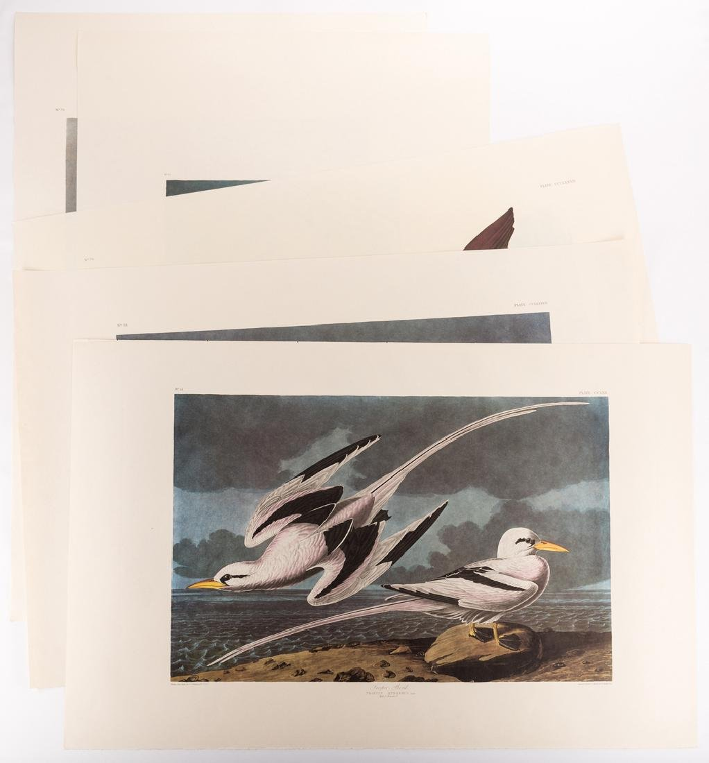 Group of 10 Amsterdam Audubon Prints