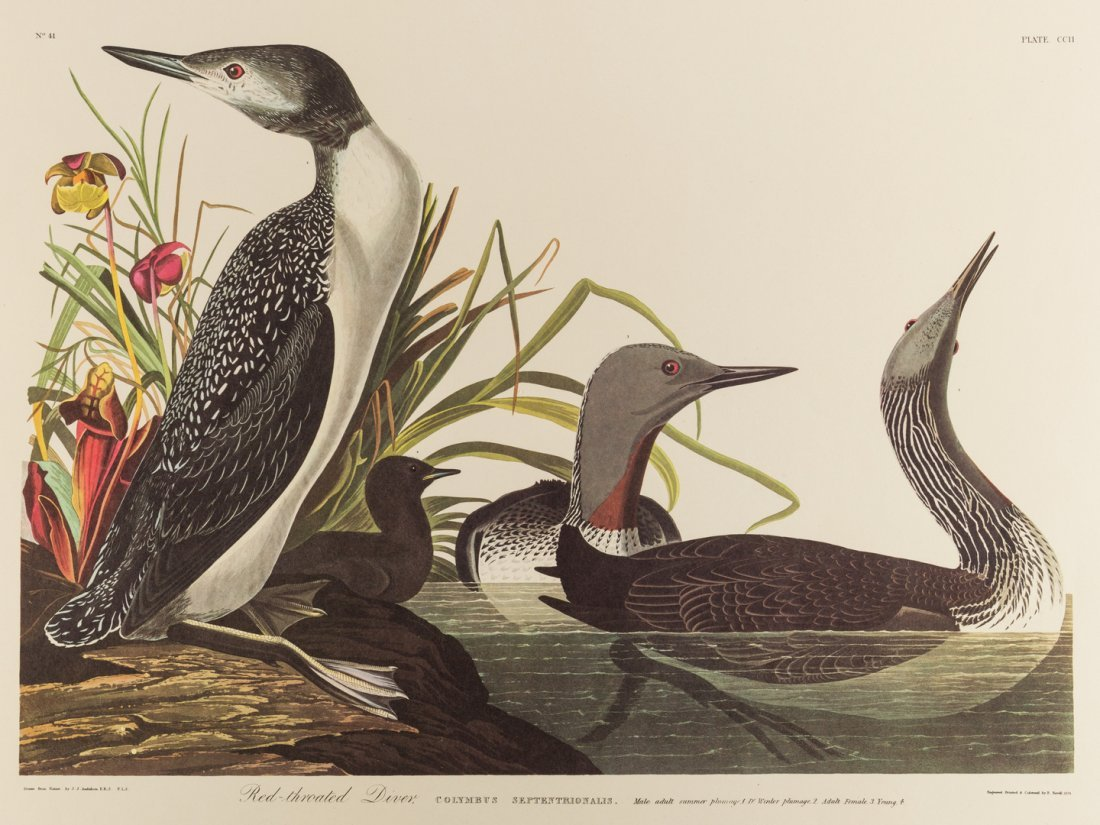 Group of 10 Amsterdam Audubon Prints - 2