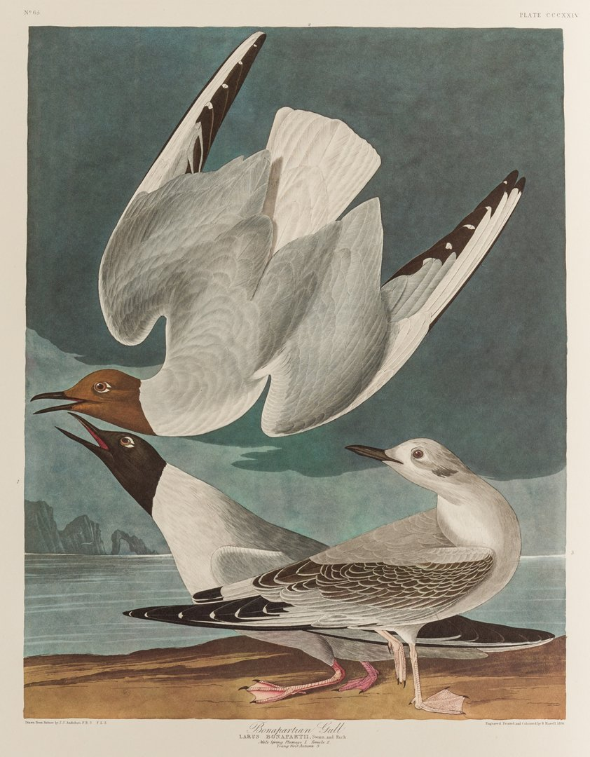 Group of 10 Amsterdam Audubon Prints - 5