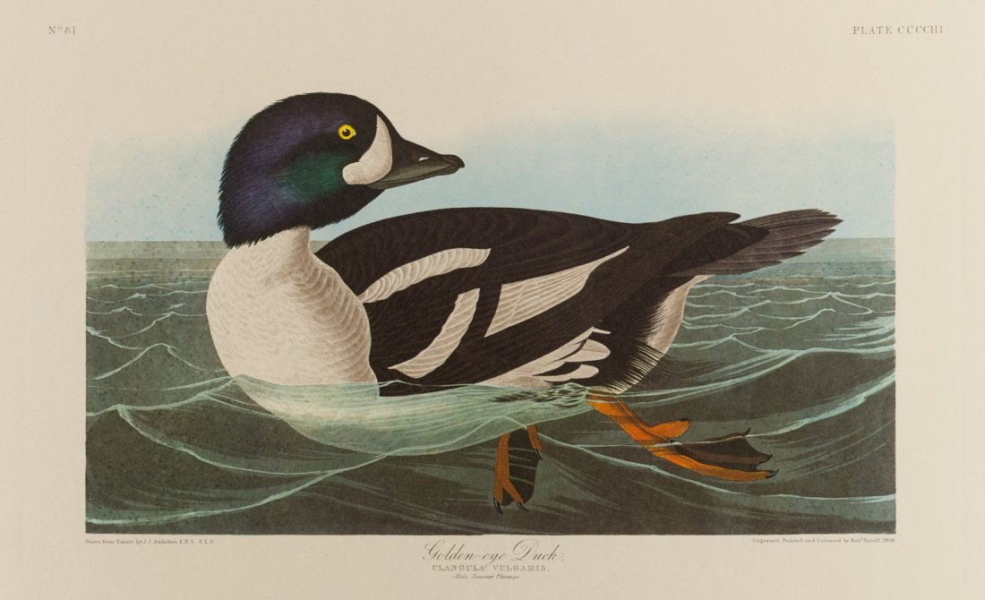 Group of 10 Amsterdam Audubon Prints - 6