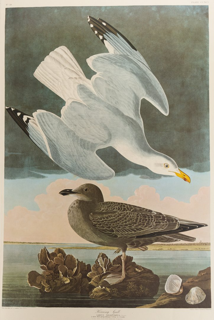 Group of 10 Amsterdam Audubon Prints - 8