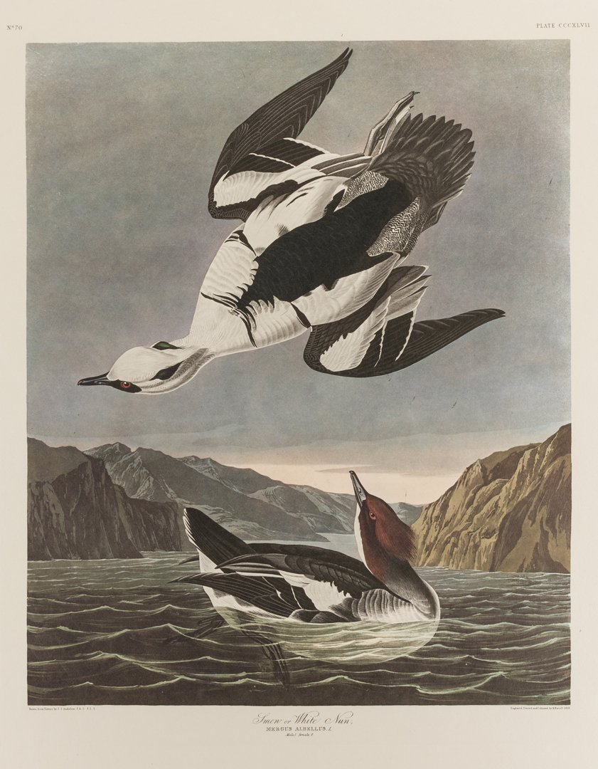 Group of 10 Amsterdam Audubon Prints - 9