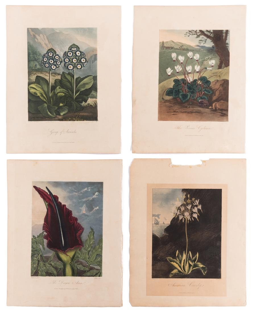 4 Temple of Flora Engravings, R.J. Thorton, 1812