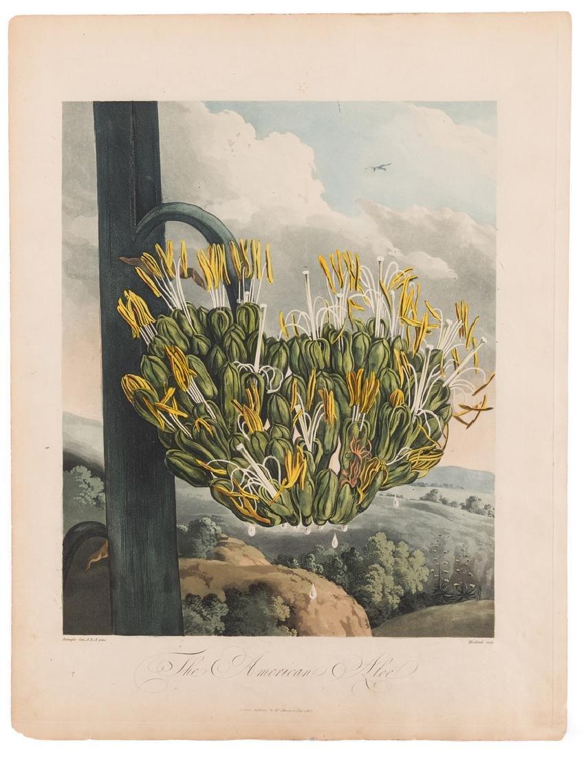 Large Thornton-American Aloe - 2