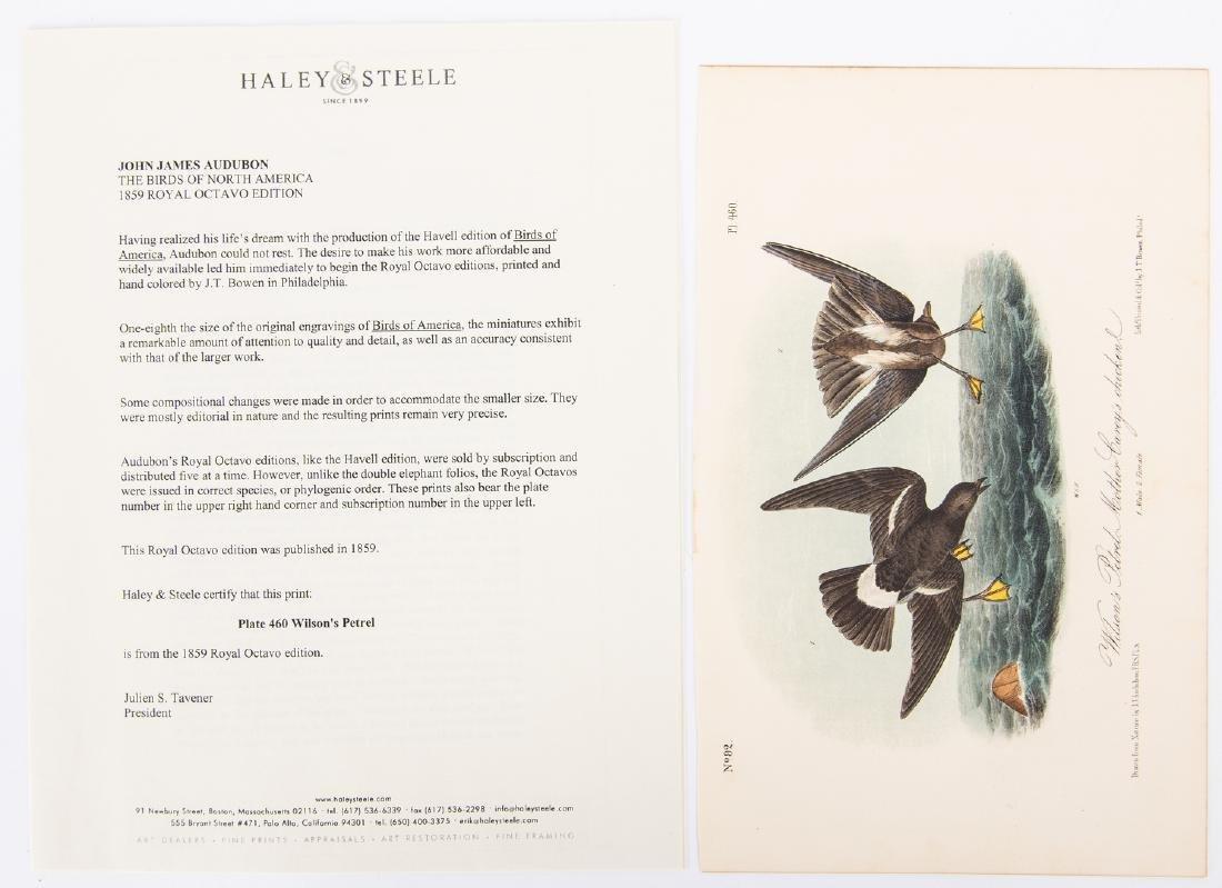 4 Audubon Royal Octavo Prints, 1859 - 10