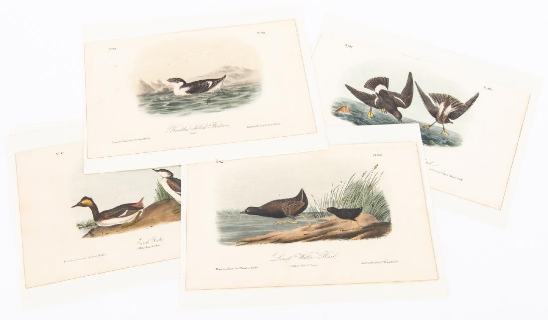 4 Audubon Royal Octavo Prints, 1859