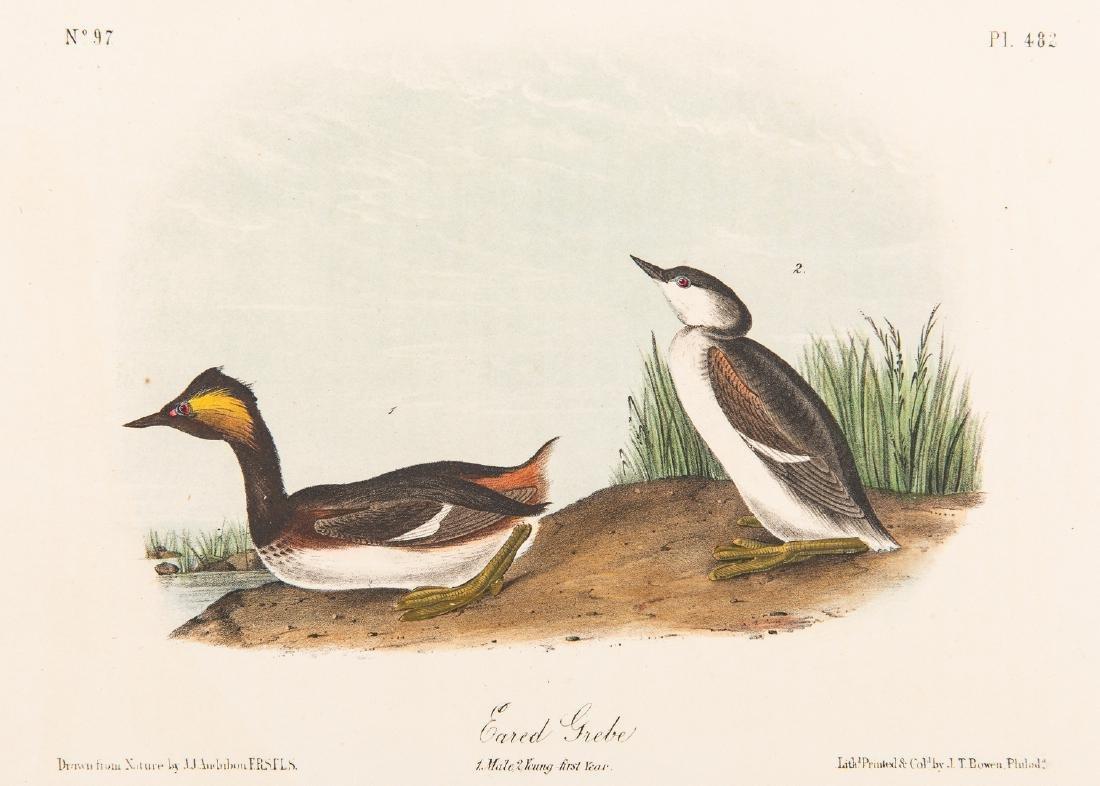 4 Audubon Royal Octavo Prints, 1859 - 2
