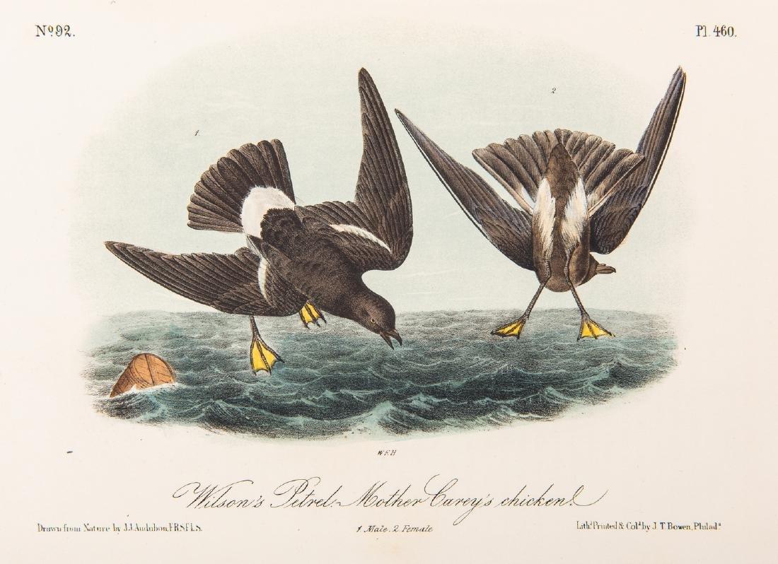4 Audubon Royal Octavo Prints, 1859 - 3