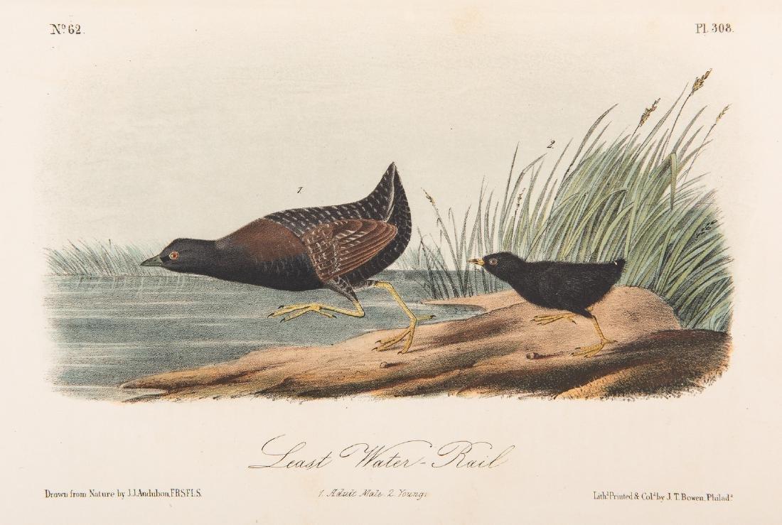 4 Audubon Royal Octavo Prints, 1859 - 4