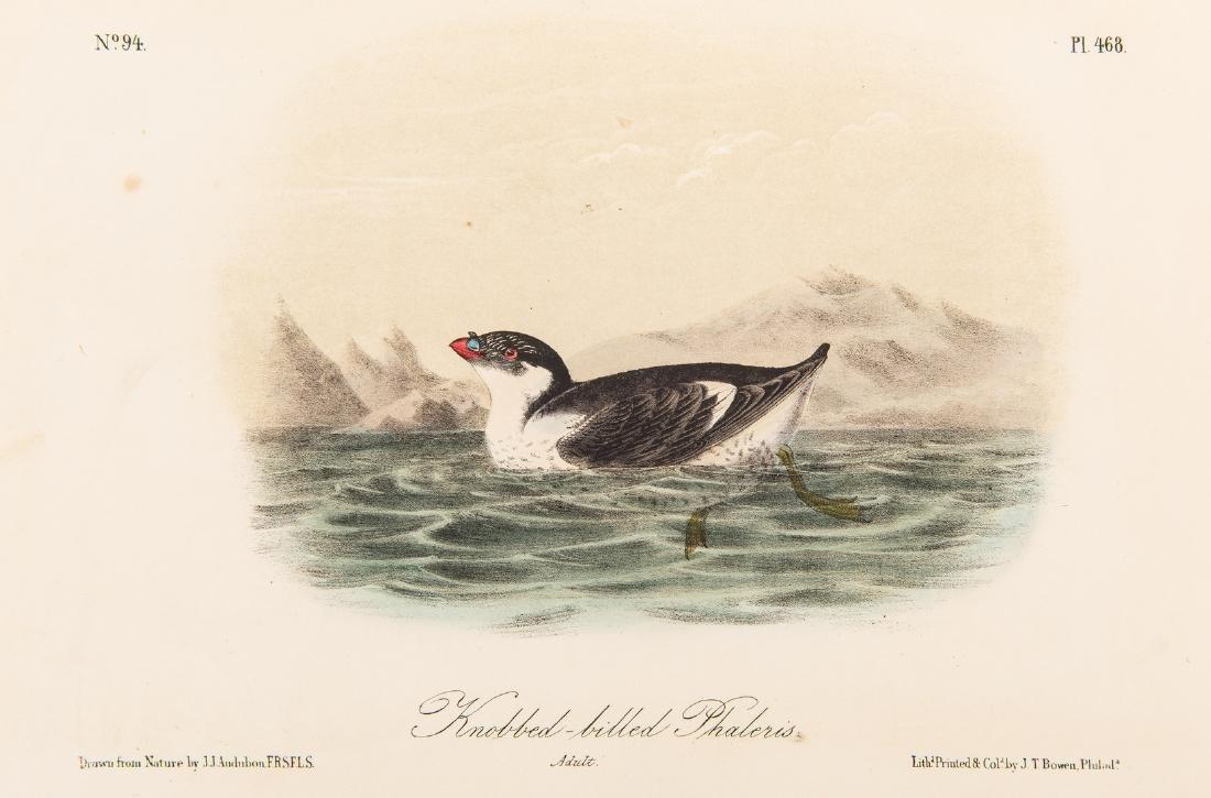 4 Audubon Royal Octavo Prints, 1859 - 5