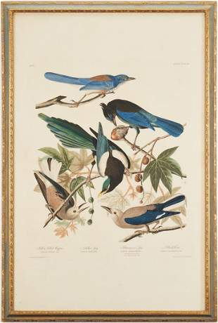 J. Audubon Havell Ed. Yellow-billed Magpie, Stellers