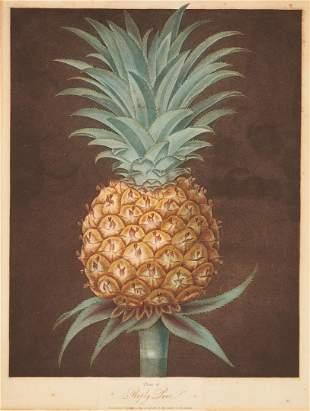 George Brookshaw Pineapple Print