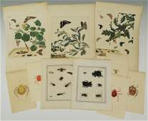 Group of 18th c butterfly tick and spider prints