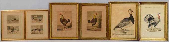 Six 18th  19th Cent Fowl Prints