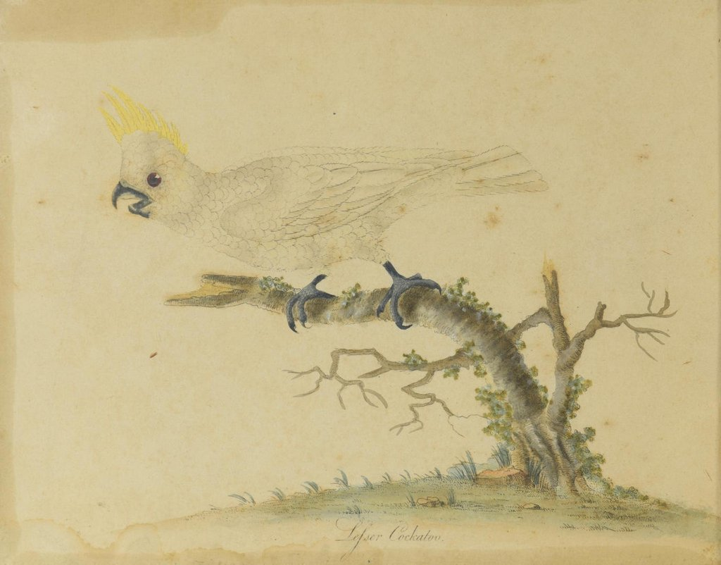 2 Art Images of Birds, O/C and Engraving - 5