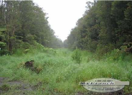 100: HAWAII-Own Land on the Big Island-B&A, $349.00/Mo