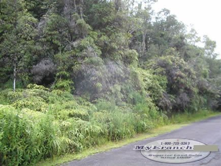 115: BIG ISLAND, HAWAII-Lush Tropical Lot-B&A, $379.00