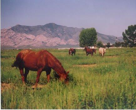 109: COLORADO-Hunt & Fish, Blanca; 5 Acres - $149/mo