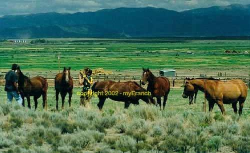 116: COLORADO-Hunt & Fish - 5 Acres; $149/mo
